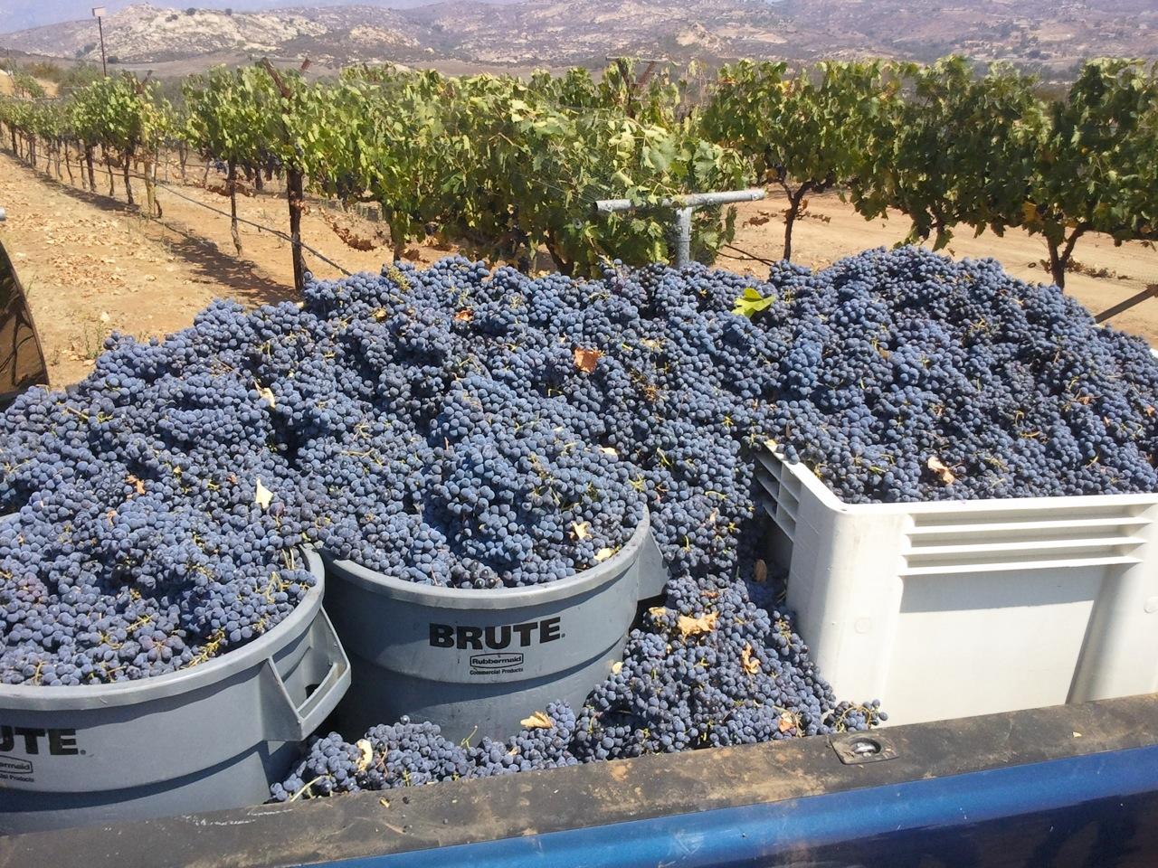 Turtle Rock Ridge Vineyard & Winery