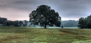 Oak Tree Conservancy